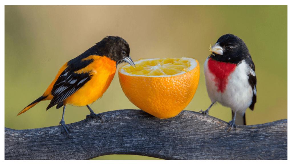 Birds Photo Quiz | Test Your Knowledge Of Birds