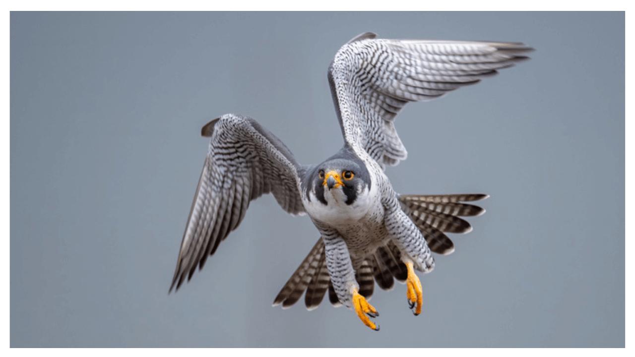 Bird Photo Quiz