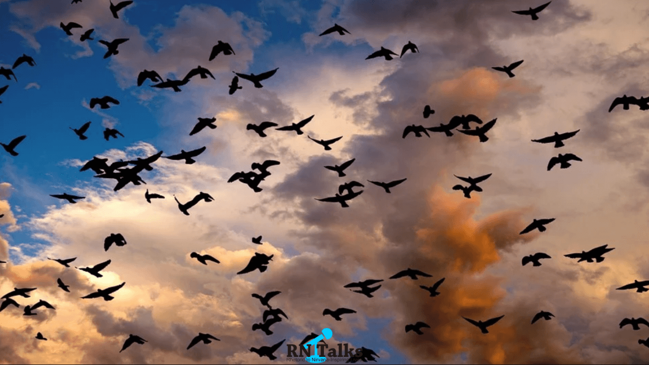 Interesting Facts About Animals And Birds