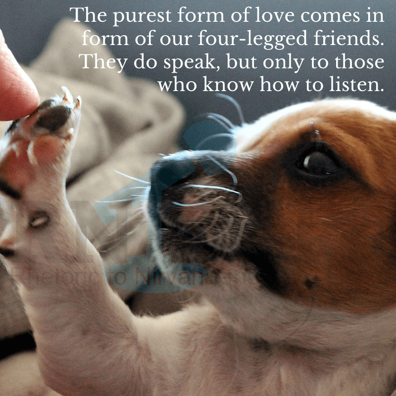 Best Dog Love Quotes For Dog Lovers And Pet Parents