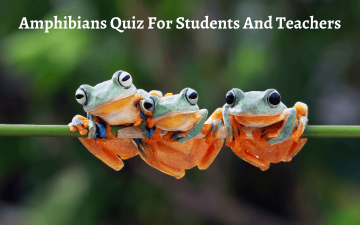 Amphibians Quiz For Students And Teachers