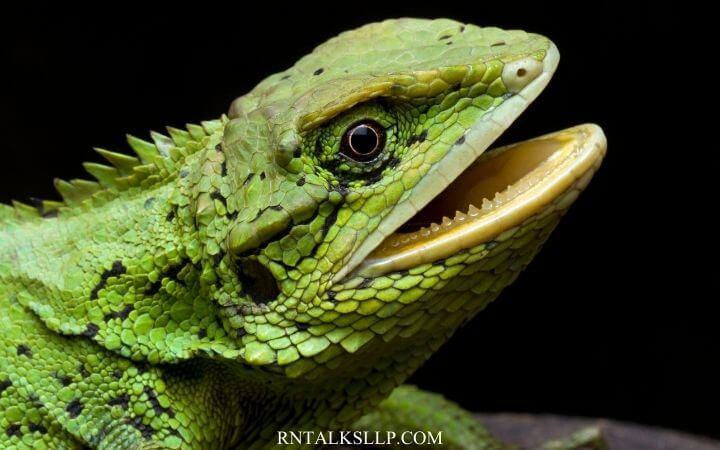 Amphibians Quiz For Students And Teachers