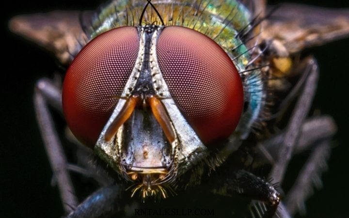 Fascinating Facts About Insects _ Test Your Knowledge on Insects Quiz