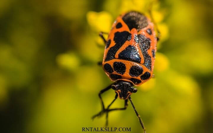 Insects Quiz Questions and Answers on Insects