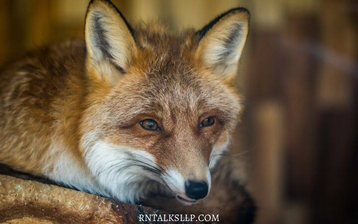Interesting Mammals Quiz Questions With Answers