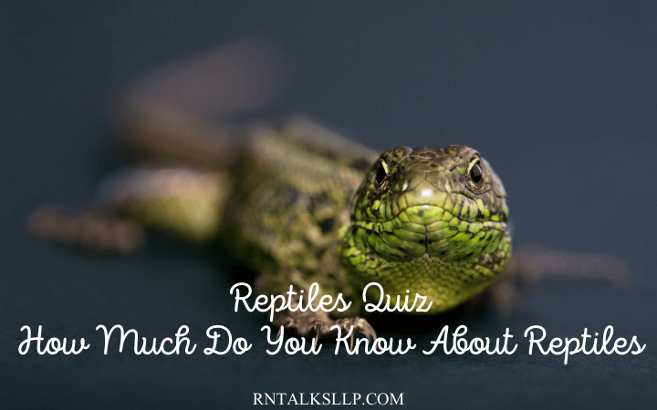Reptiles Quiz How Much Do You Know About Reptiles
