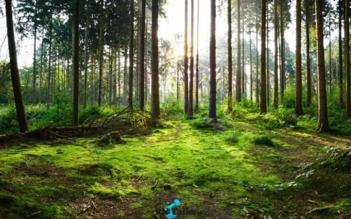 Best World Environment Day Literacy Quiz