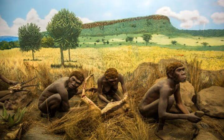Primates Anthropology Quiz With Answers