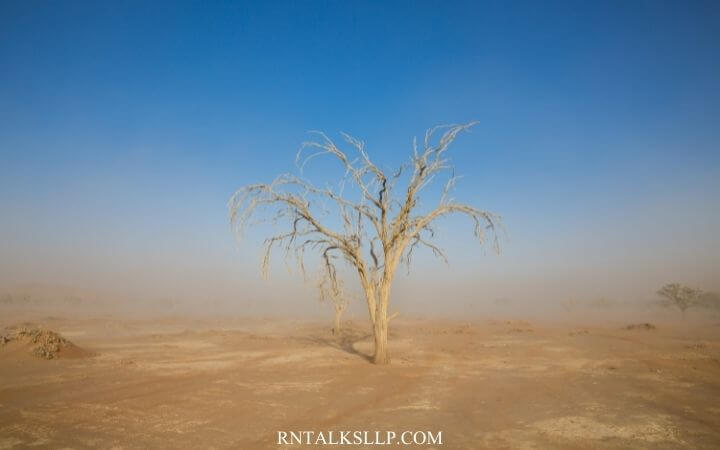 Quiz: How Much Do You Know About Desertification and Drought