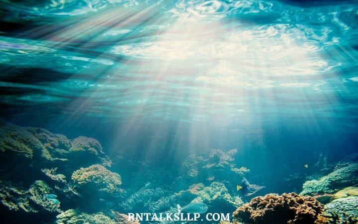The Ultimate Sea Creature Quiz With RNTalks