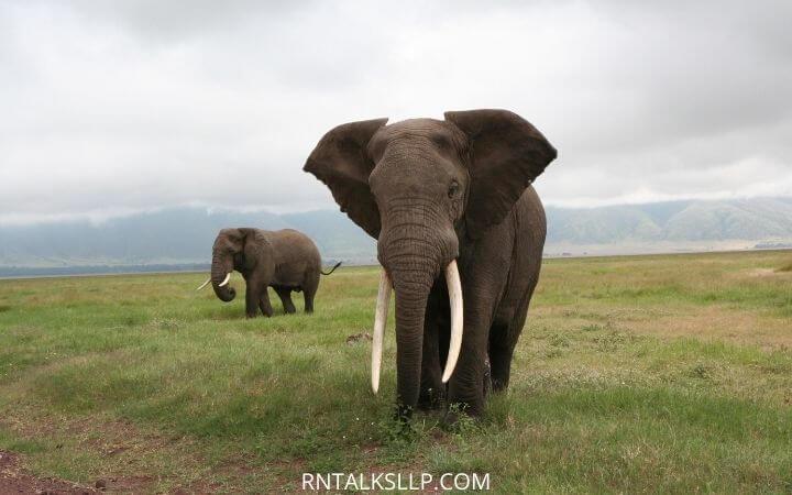 World Elephant Day Quiz With RNTalks